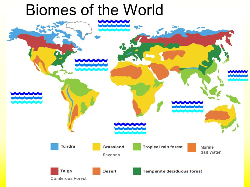 Biomes of the world marine salt water savanna coniferous forest 1 biomes of the world marine salt water savanna coniferous forest gumiabroncs