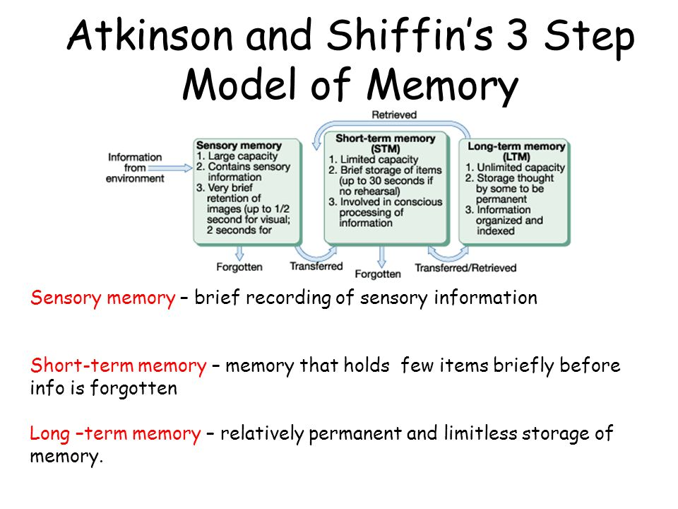 sensory memory model Information-processing approach • atkinson & shiffrin (1968): modal model of memory •sensory memory •short-term memory •long-term memory.