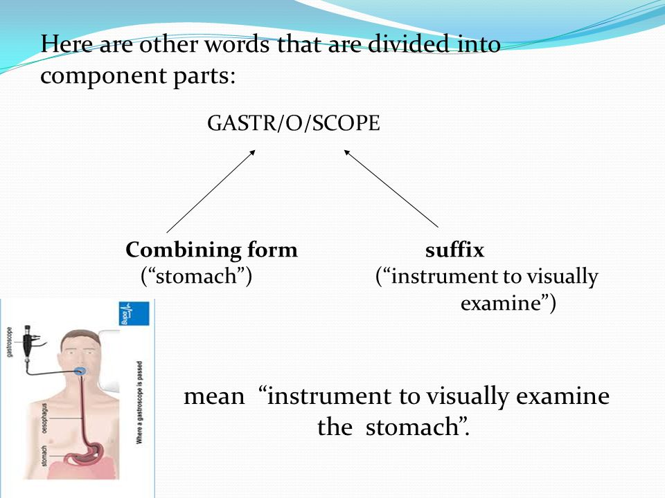 Medical Terminology Chapter ppt video online download