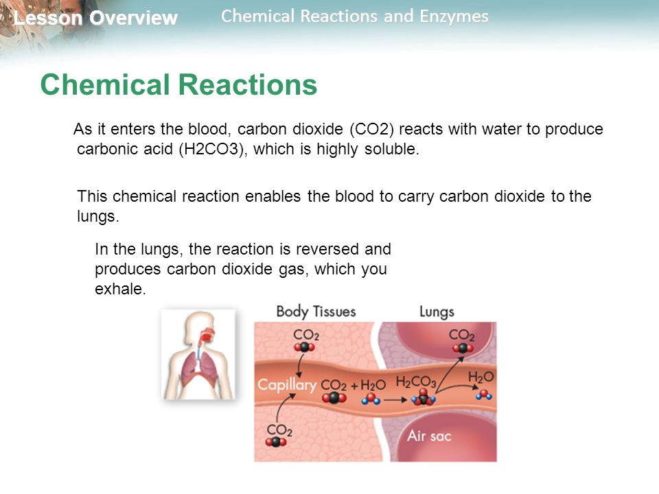 2.4 Chemical Reactions and Enzymes - ppt video online download