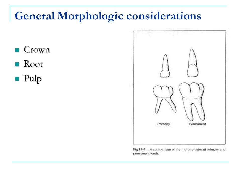 General Morphologic considerations