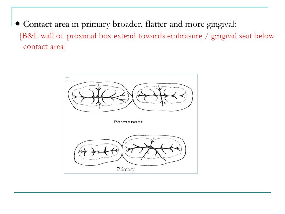Contact area in primary broader, flatter and more gingival: