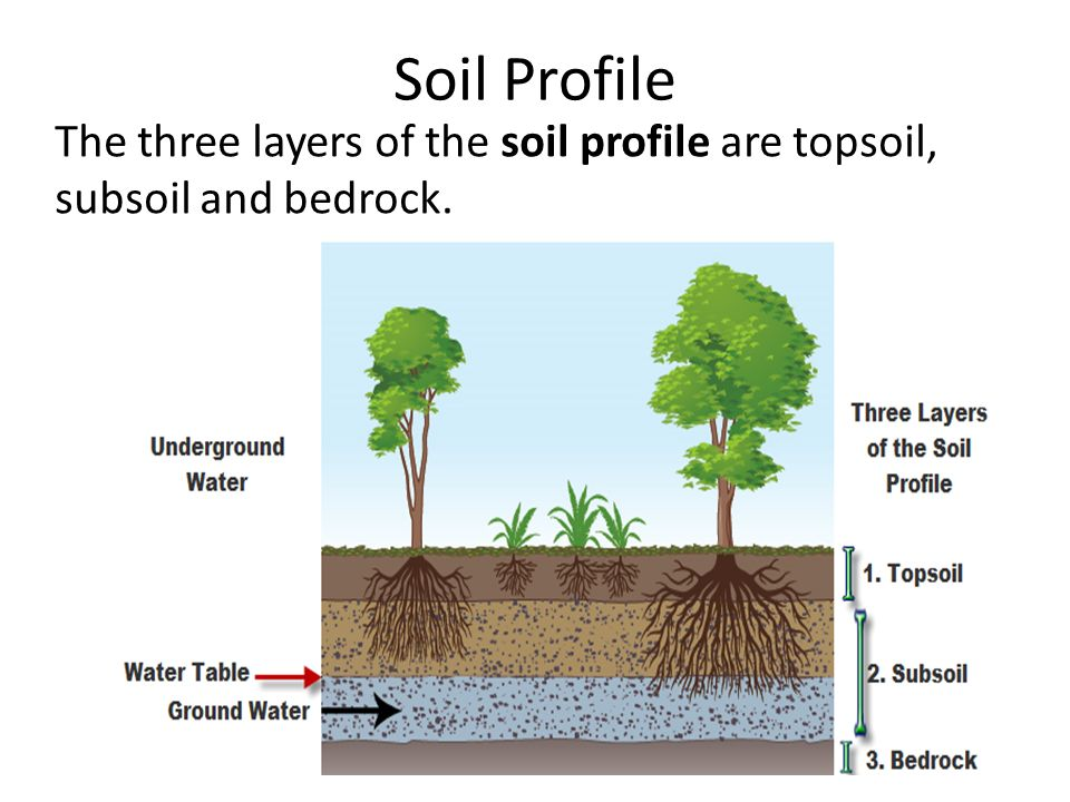 How much fertile soil does earth have ppt video online for What are the different layers of soil