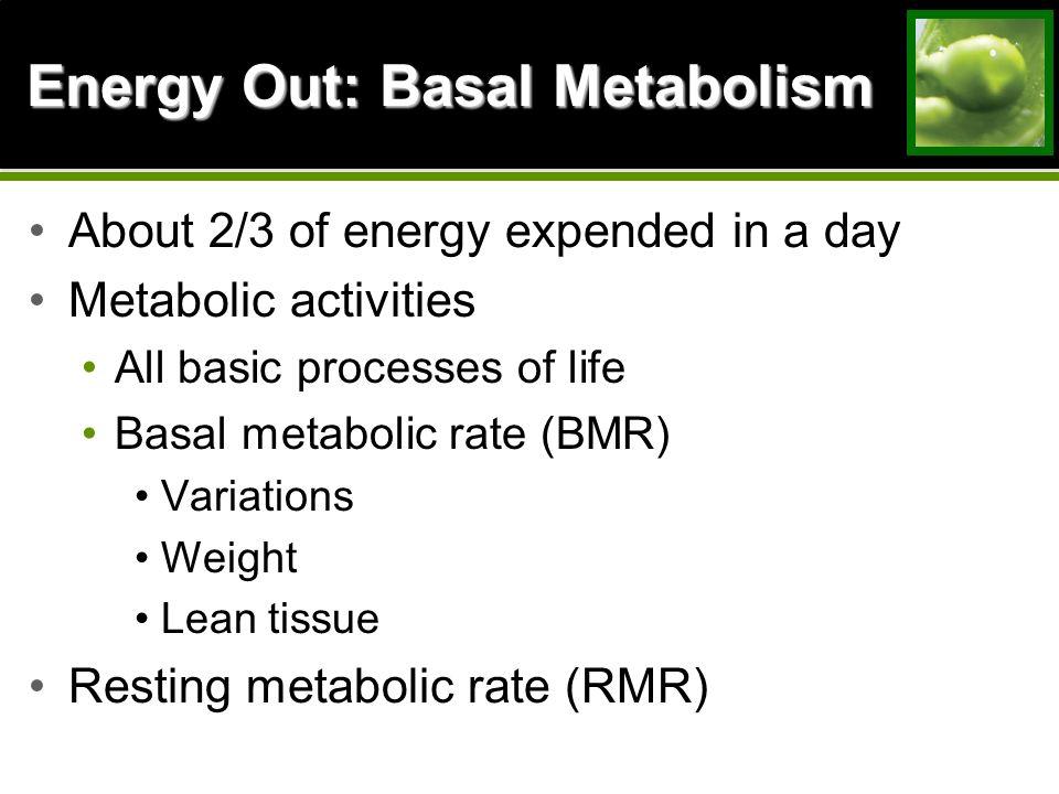 basaal metabolisme uitrekenen