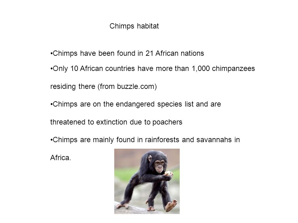 Chimps habitat Chimps have been found in 21 African nations.