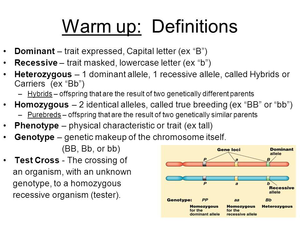 Homozygous Definition
