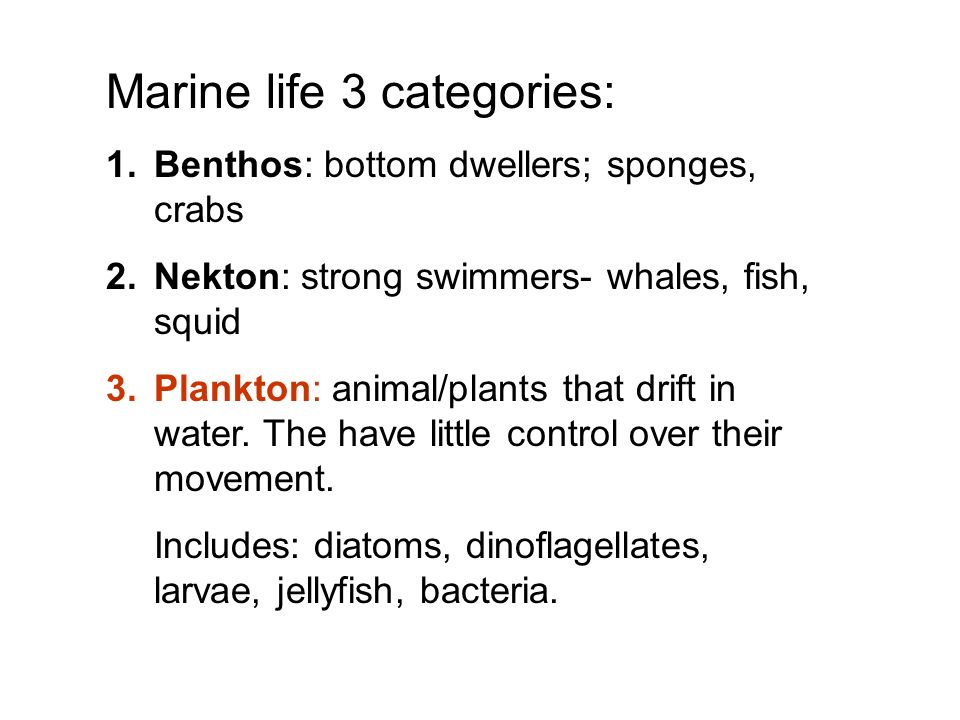 Marine life 3 categories: