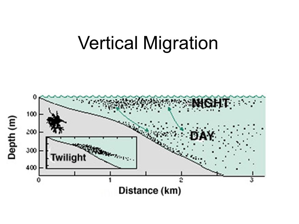 Vertical Migration