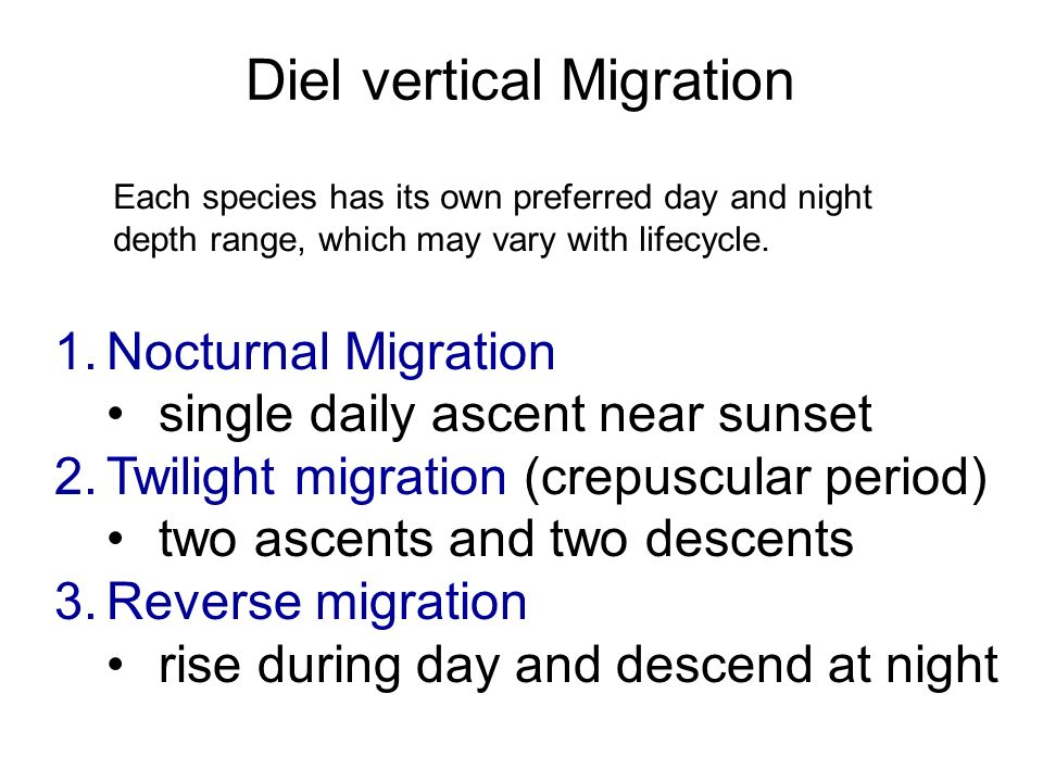 Diel vertical Migration