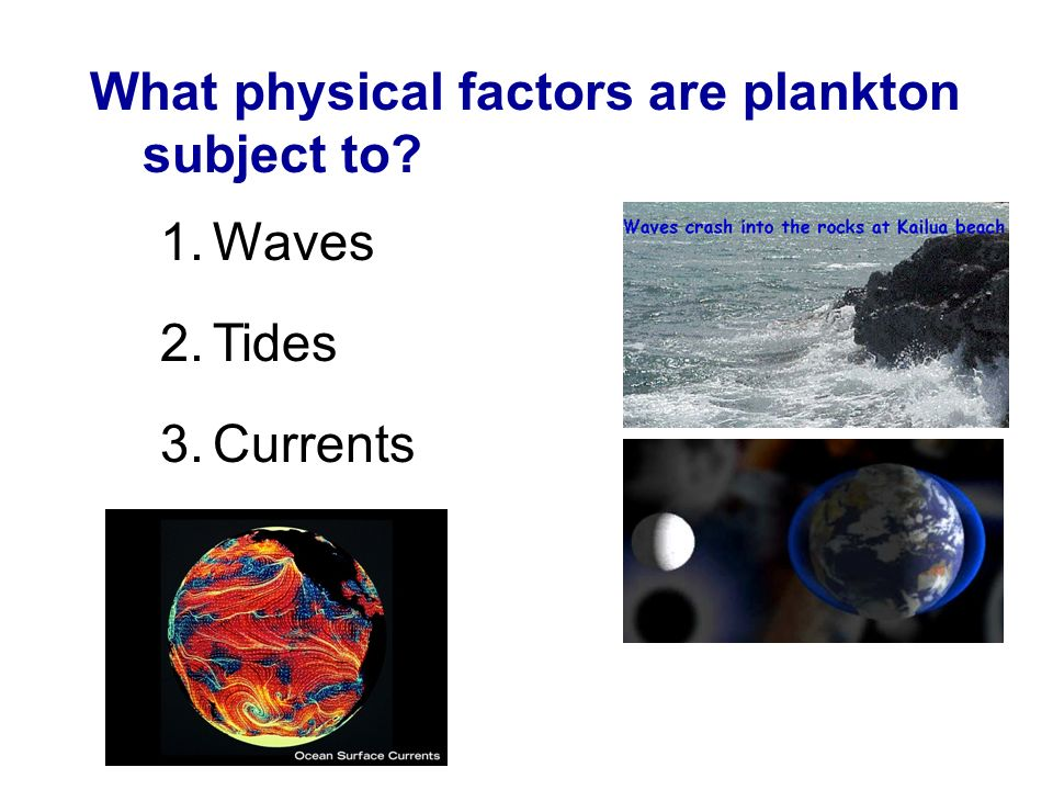 What physical factors are plankton subject to