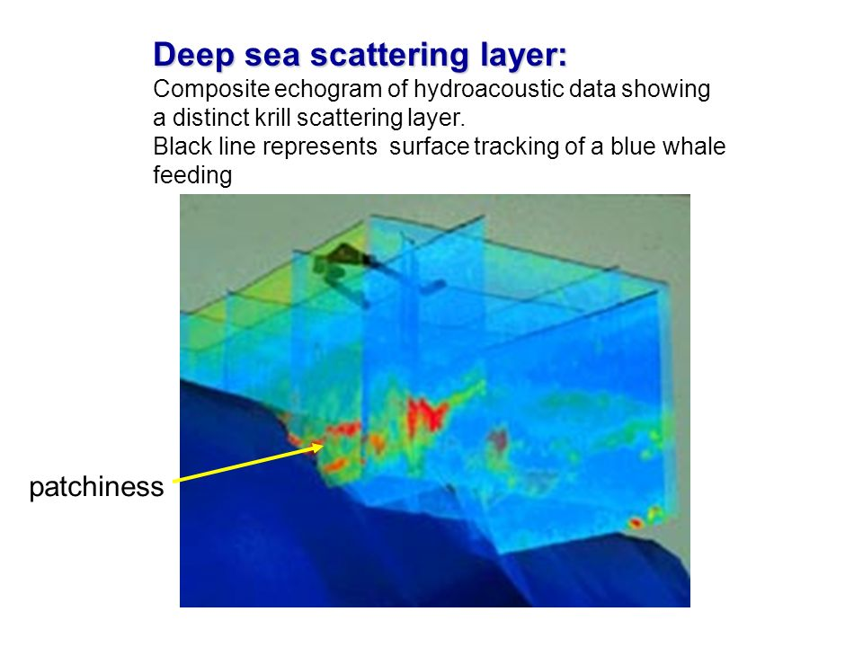 Deep sea scattering layer: