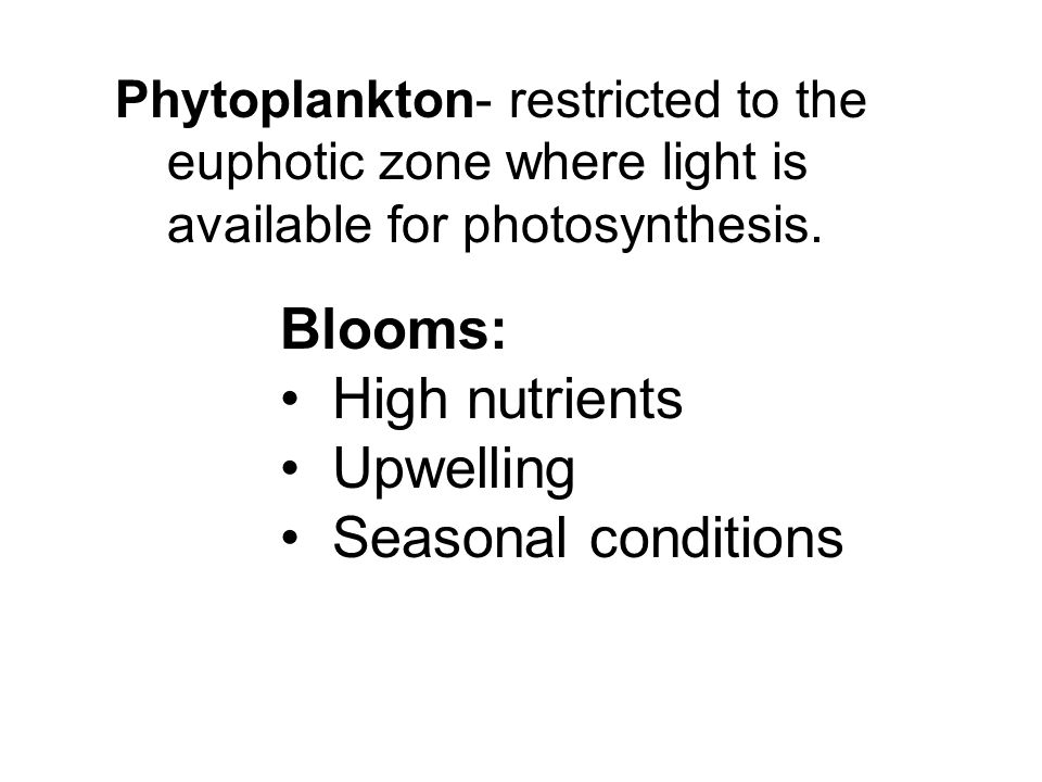 Blooms: High nutrients Upwelling Seasonal conditions