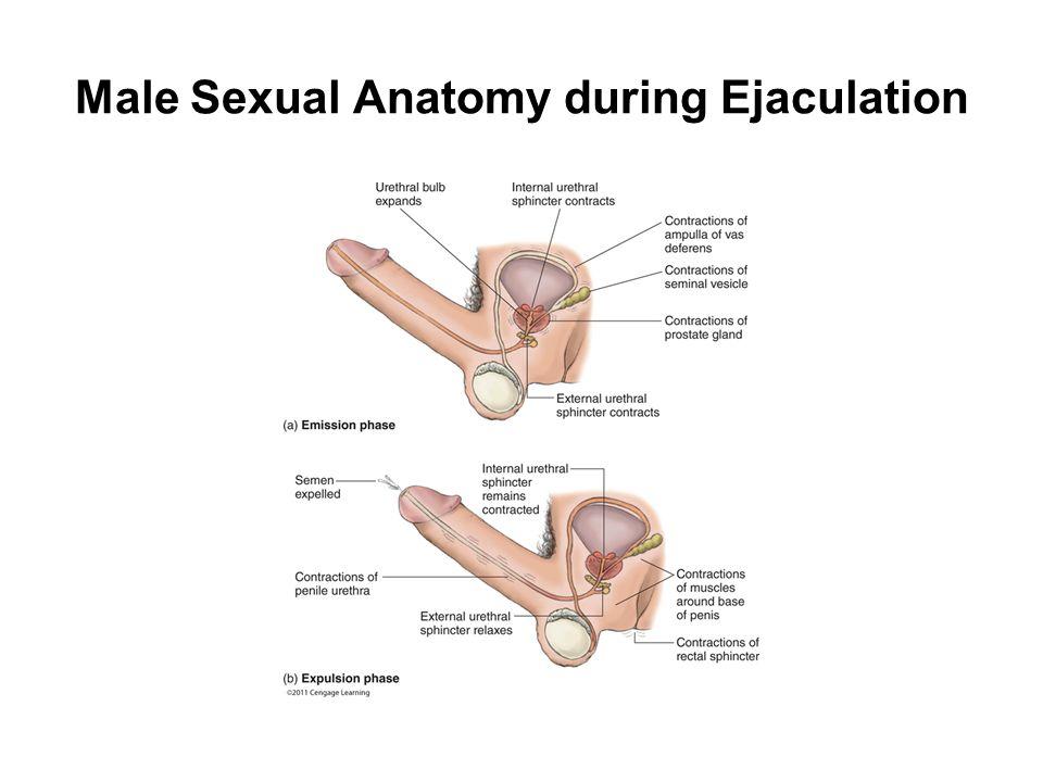 Physiology Sex 56