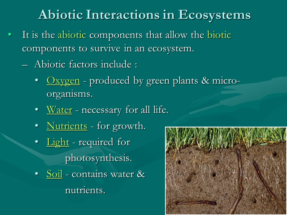 relationship between biotic abiotic components of ecosystem