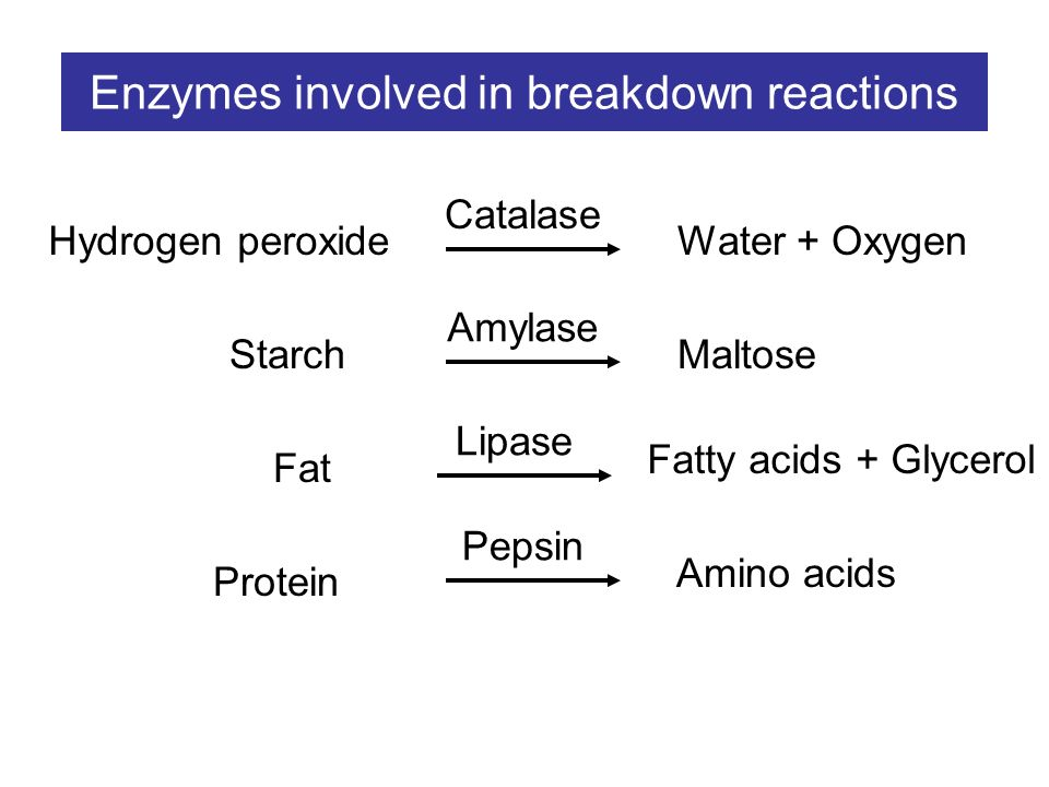 investigation of the enzymatic effects of materials on hydrogen peroxide solution Enzyme lab - teachers guide  materials: 6 test tubes test tube holders 3% hydrogen peroxide straight-edged razor blade scissors and.