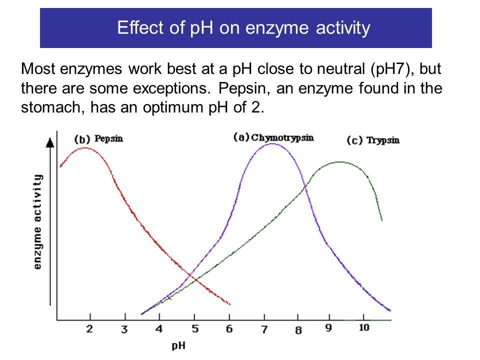 effect of an acidic fluid on enzymatic activity meat Changes in lysosomal enzyme activities and shear values of high pressure treated meat an increase in activity was also observed for acid phosphatase enzyme the activity for this enzyme was twice jj macfarlanepressure-heat treatments of meat: effect of prior aging treatments on.