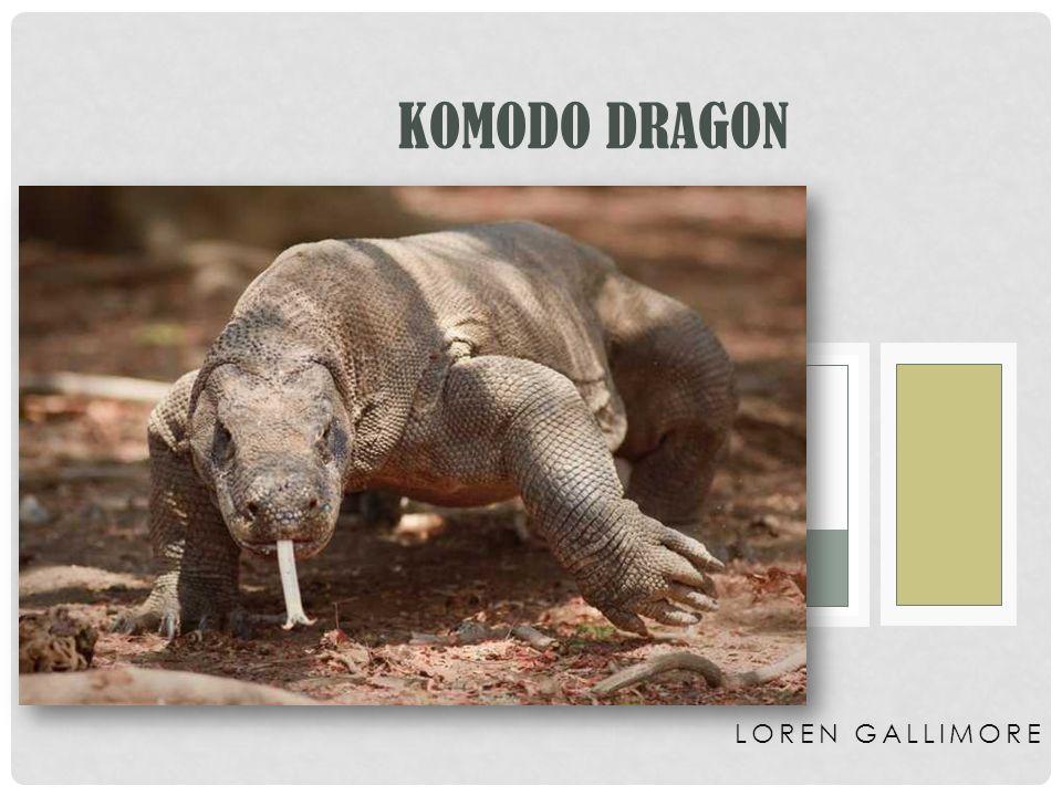 Komodo Dragon Loren Gallimore