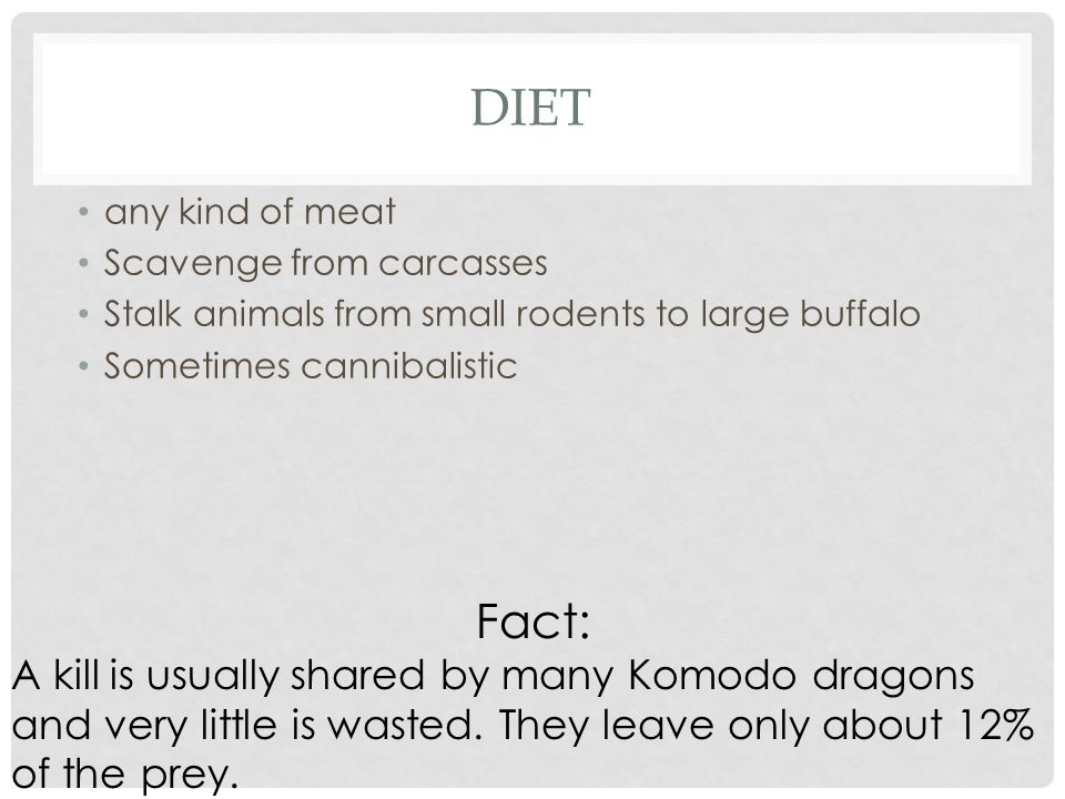 Diet any kind of meat. Scavenge from carcasses. Stalk animals from small rodents to large buffalo.