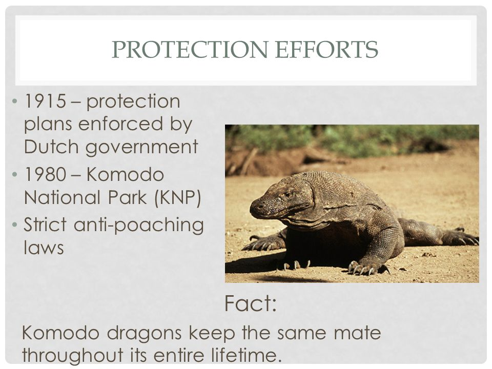 Protection Efforts Fact: