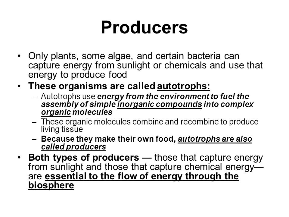Producers Only plants, some algae, and certain bacteria can capture energy from sunlight or chemicals and use that energy to produce food.