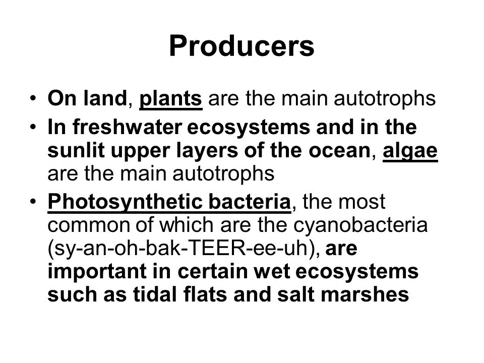 Producers On land, plants are the main autotrophs