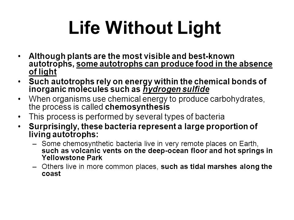 Life Without Light Although plants are the most visible and best-known autotrophs, some autotrophs can produce food in the absence of light.