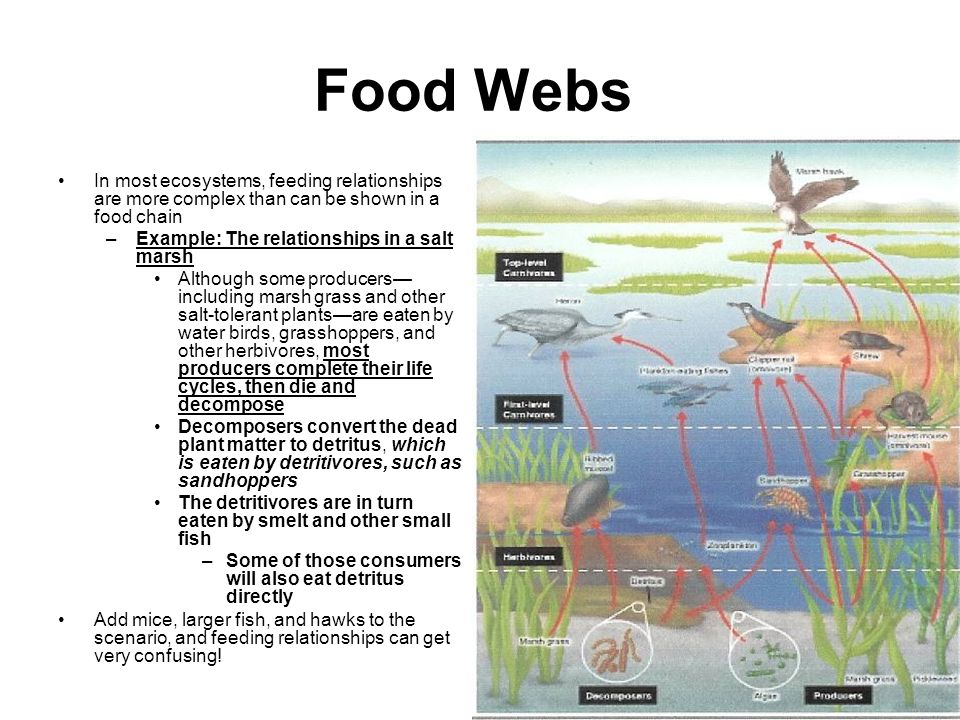 Food Webs In most ecosystems, feeding relationships are more complex than can be shown in a food chain.