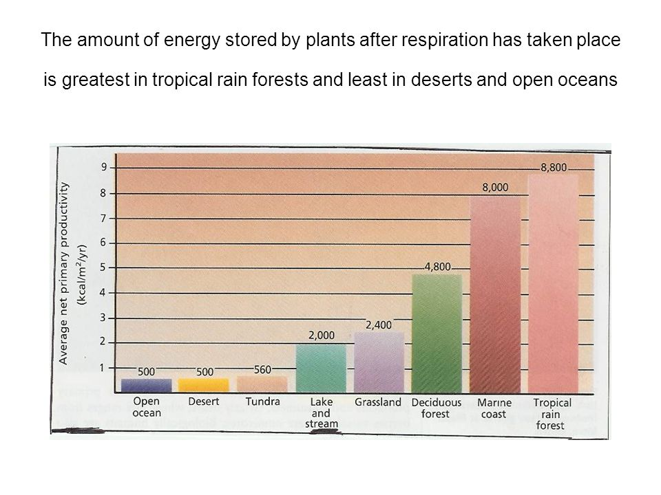 The amount of energy stored by plants after respiration has taken place is greatest in tropical rain forests and least in deserts and open oceans