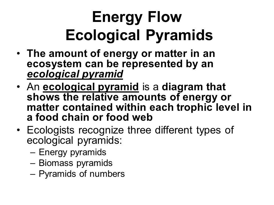 Energy Flow Ecological Pyramids