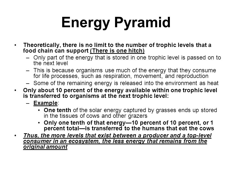 Energy Pyramid Theoretically, there is no limit to the number of trophic levels that a food chain can support (There is one hitch)