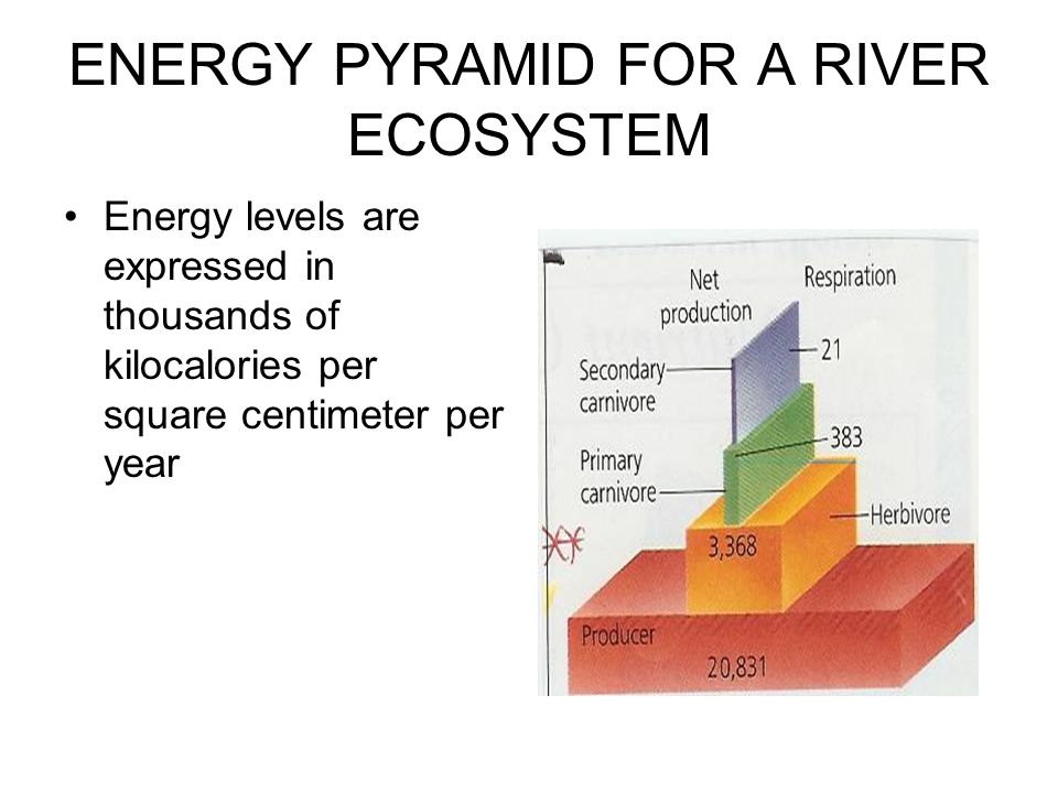 ENERGY PYRAMID FOR A RIVER ECOSYSTEM