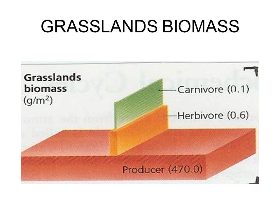 GRASSLANDS BIOMASS
