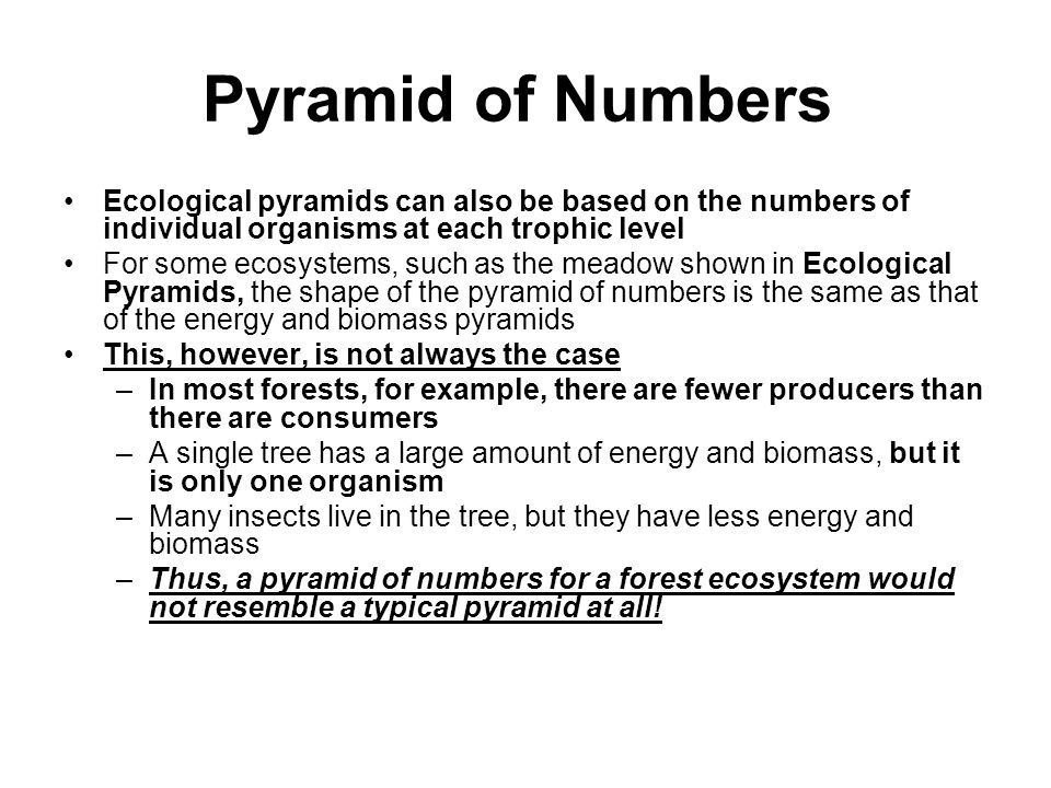 Pyramid of Numbers Ecological pyramids can also be based on the numbers of individual organisms at each trophic level.