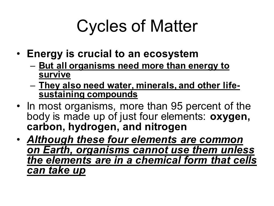 Cycles of Matter Energy is crucial to an ecosystem