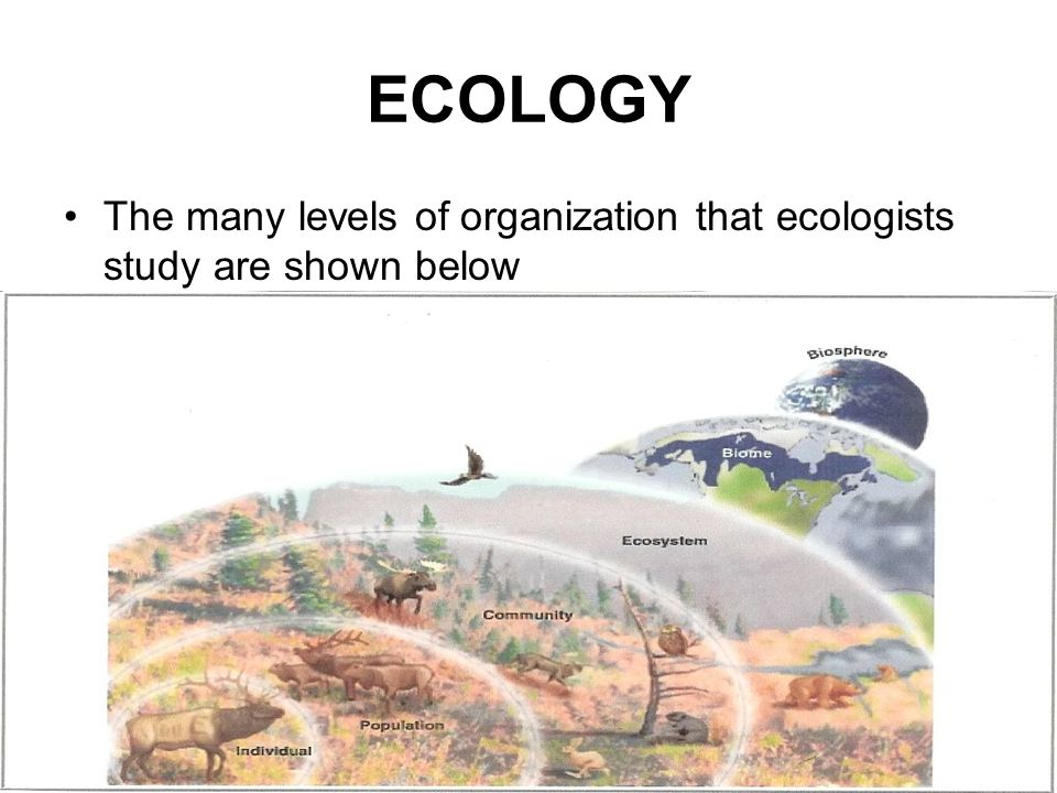 ECOLOGY The many levels of organization that ecologists study are shown below
