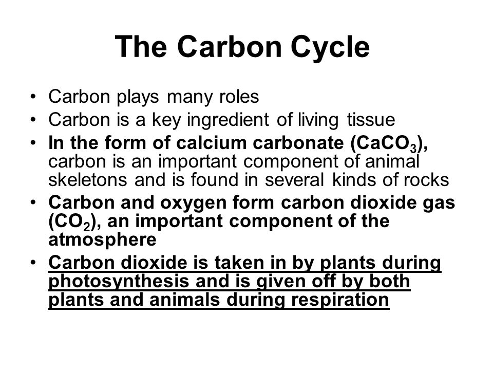 The Carbon Cycle Carbon plays many roles