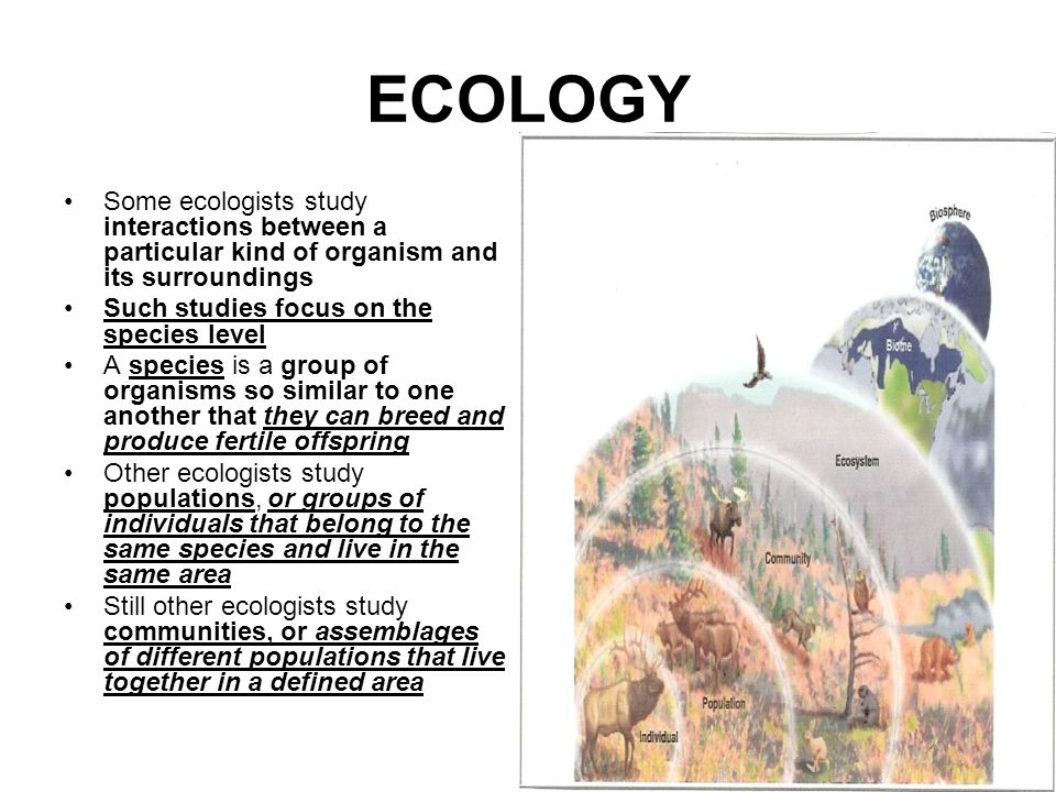ECOLOGY Some ecologists study interactions between a particular kind of organism and its surroundings.