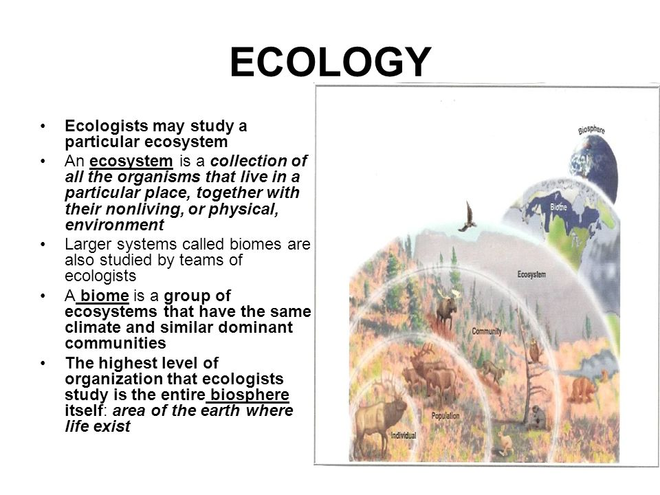 ECOLOGY Ecologists may study a particular ecosystem