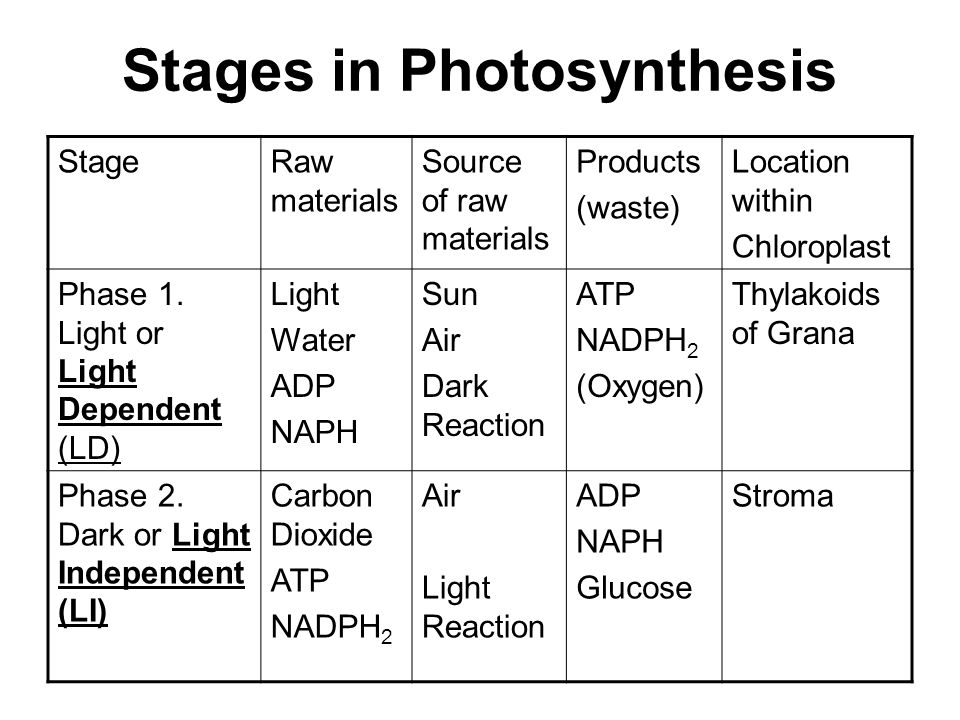 photosynthesis stages Stages of photosynthesis stage one: light reactions this stage is so-called because it depends on light being available the reactions of this stage also require specific enzymes to.