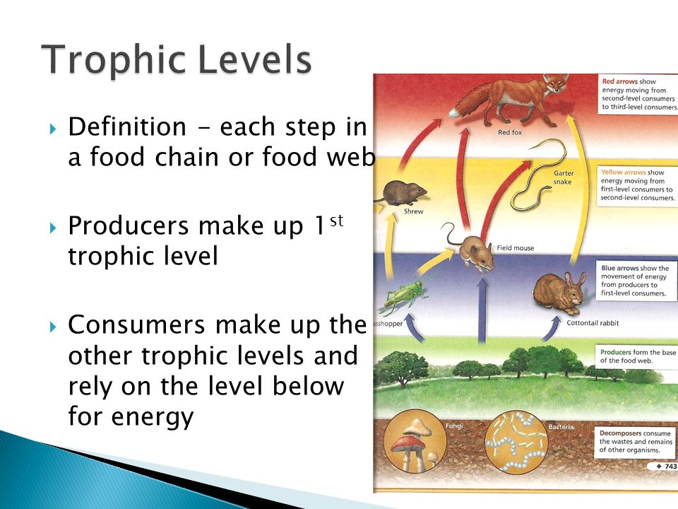 Trophic Levels Definition - each step in a food chain or ...