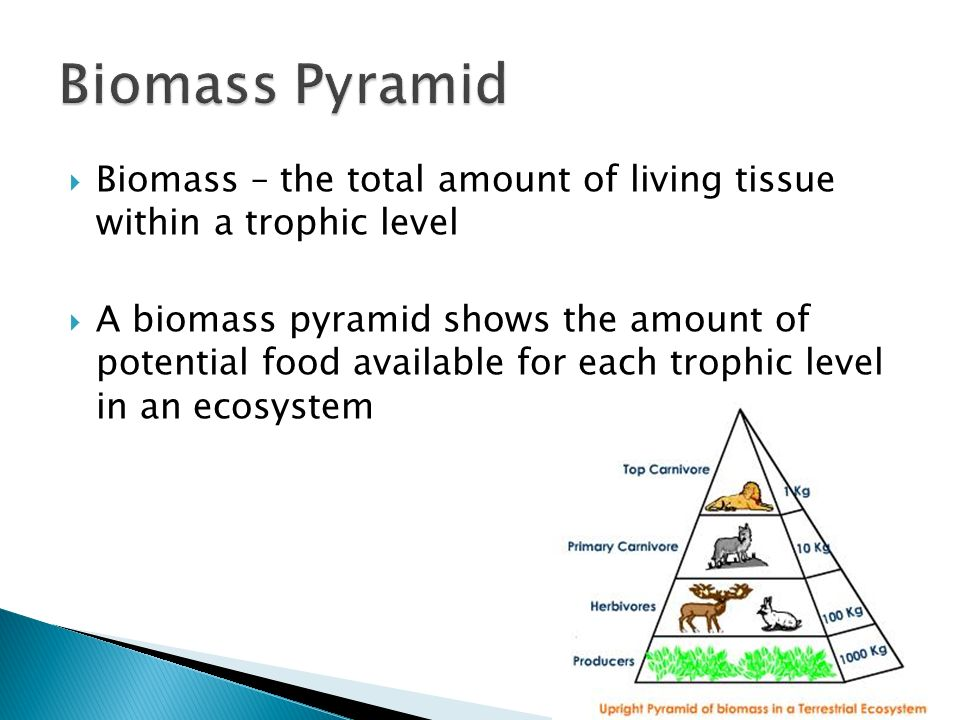 how to draw a pyramid of biomass