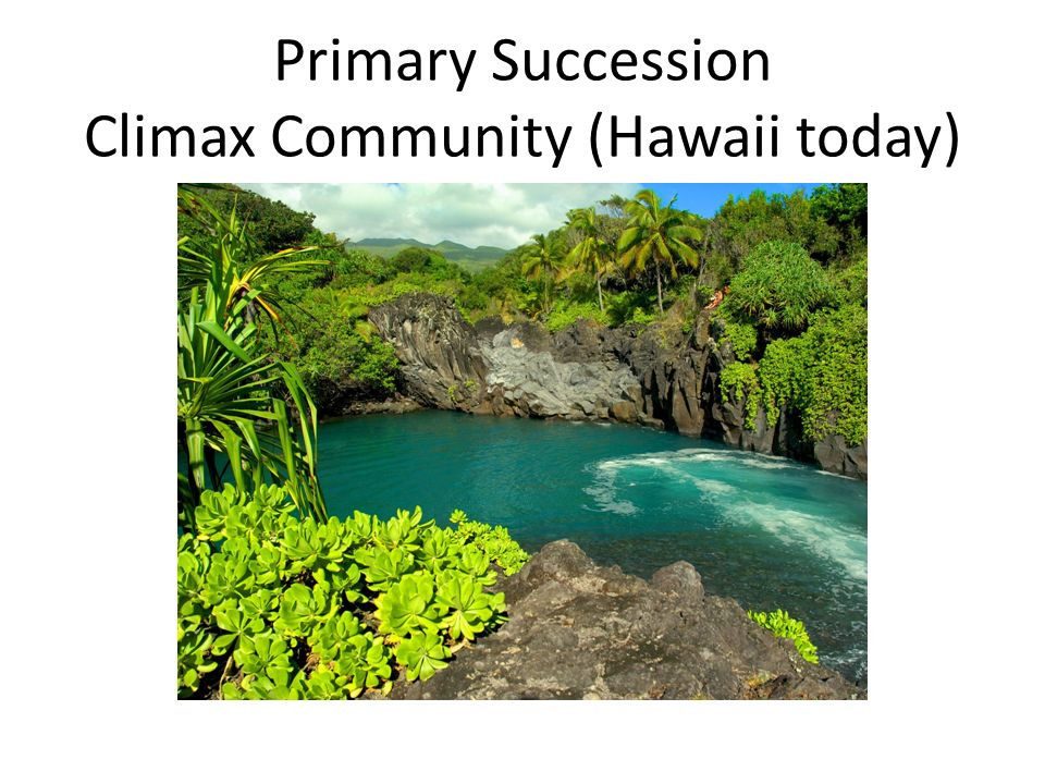Community ecology 63 part 1 ppt video online download 23 primary succession climax community hawaii today publicscrutiny Choice Image