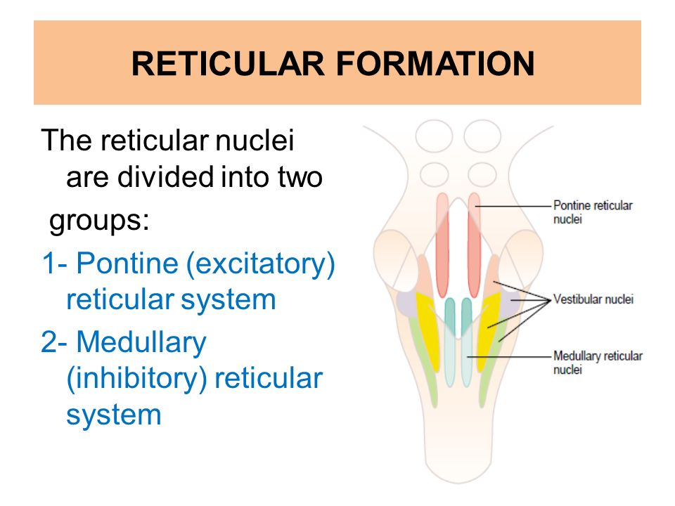 function of reticular formation The pontine reticular formation is part of the ascending reticular activating   the current data do not address the role of pontine reticular formation gaba.