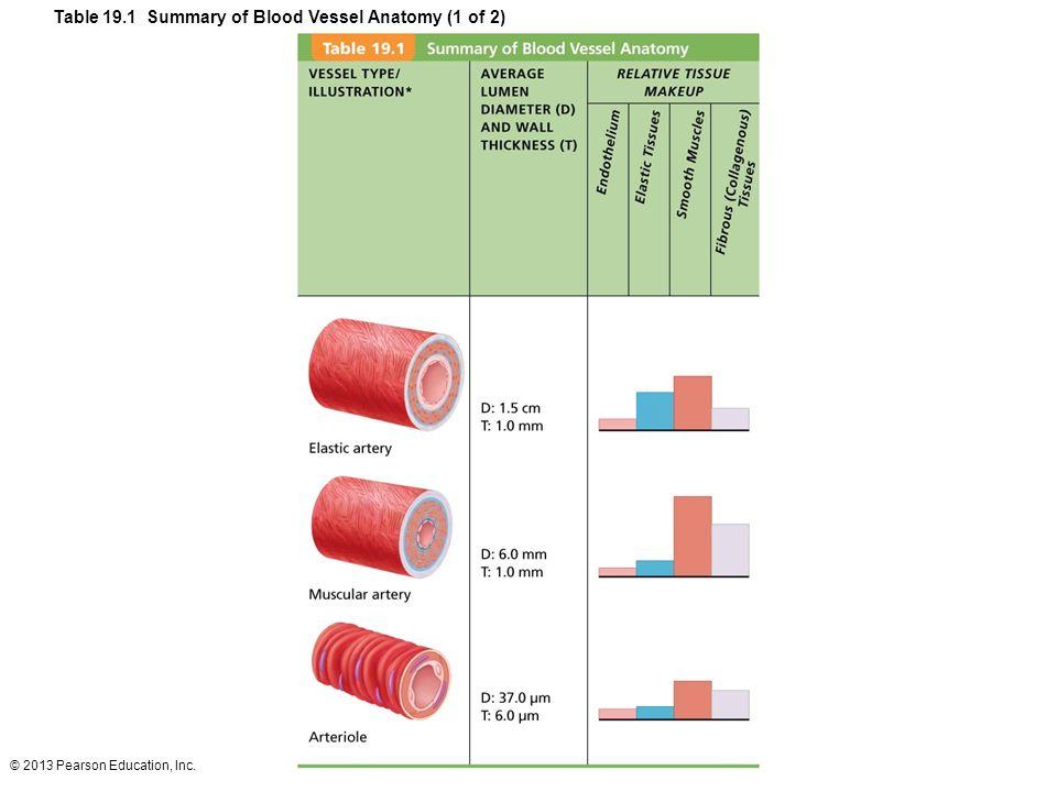 Fantástico Blood Vessel Anatomy Diagram Patrón - Anatomía de Las ...