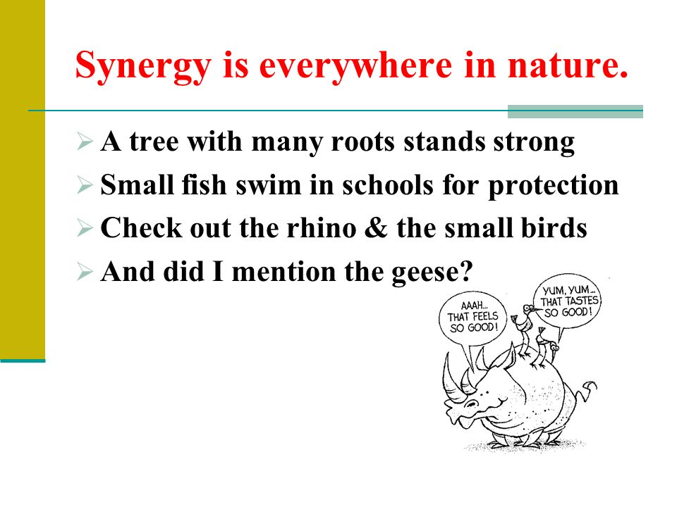 bird and synergy Support for synergy automatic controller explore the rain bird support center to find manuals, literature and videos on current and discontinued rain bird products if you have any.