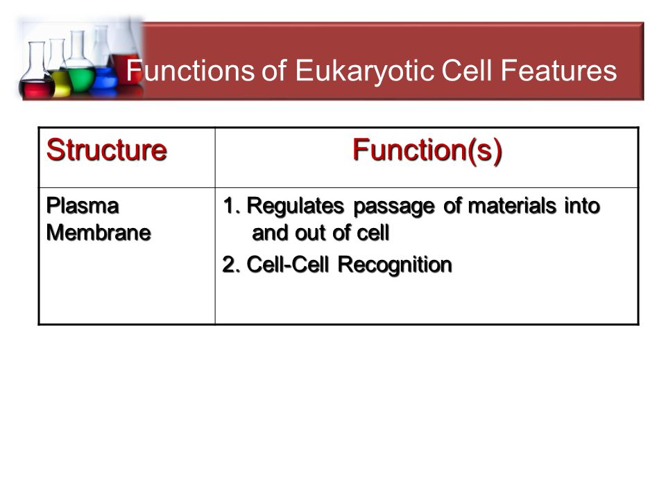 features and functions of cells Overview of general physiologic features and functions of vitamin d1–4 hector f   teoblasts and to the proximal convoluted tubule cells within seconds.