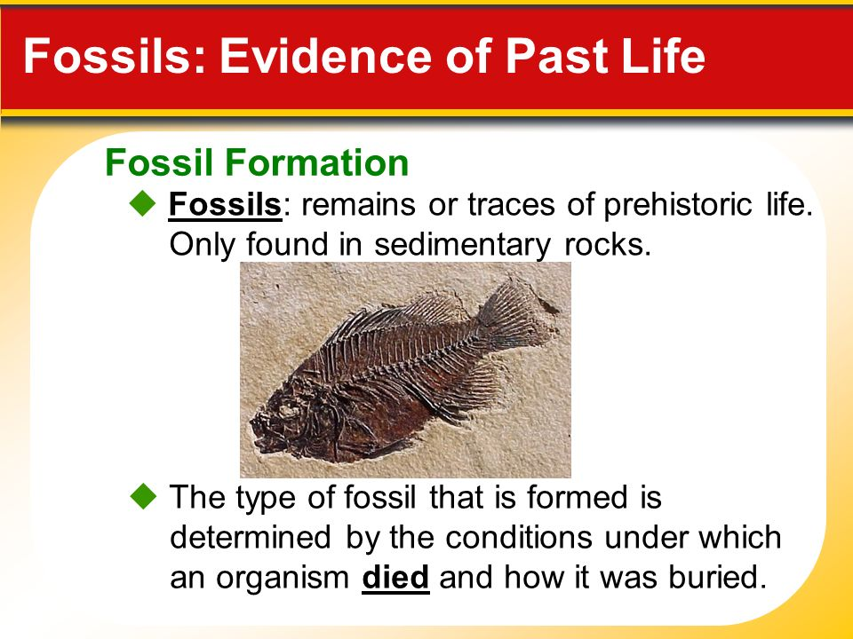 sedimentary rocks and fossils relationship