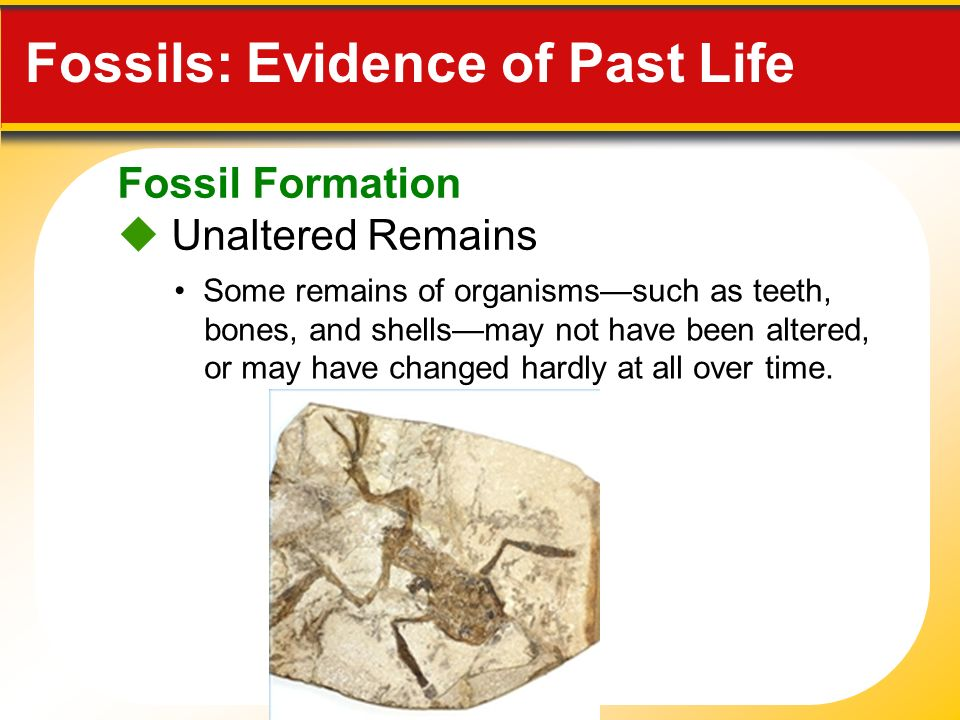 Types of fossils Learning Geology