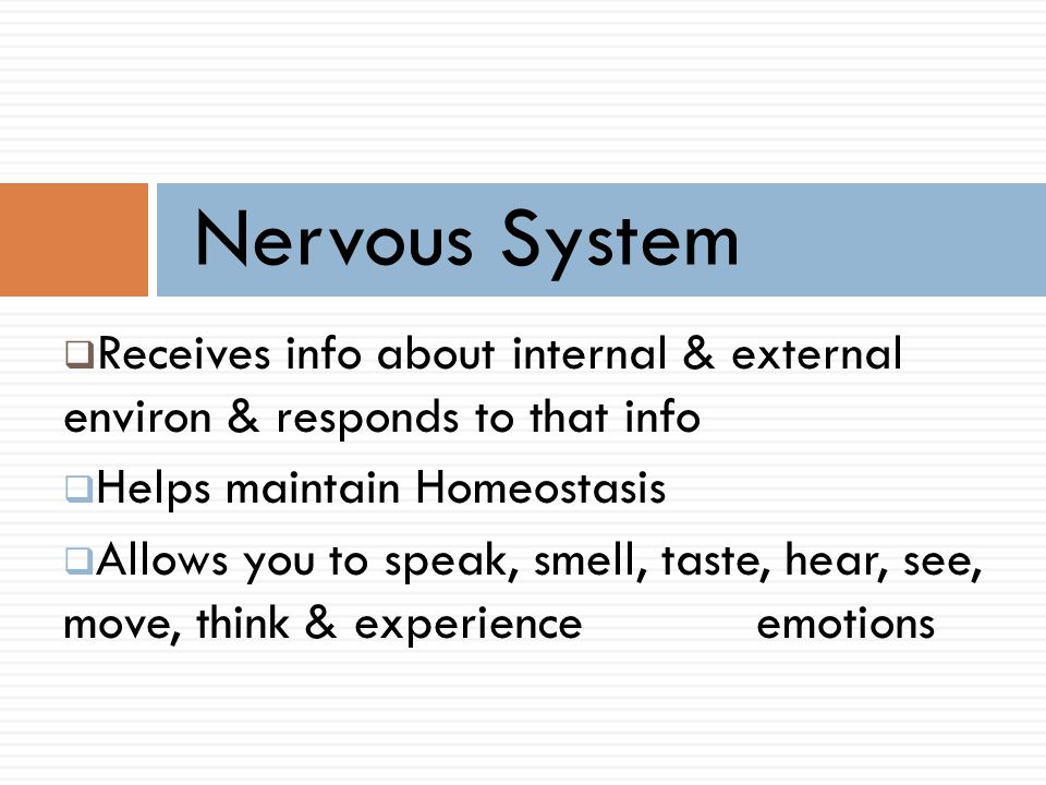 Nervous System Receives Info About Internal External Environ. 1 Nervous System. Worksheet. How The Nervous System Works Worksheet Answer Key At Mspartners.co