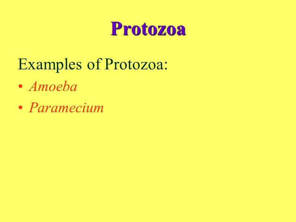 Kingdom Protoctista Ppt Video Online Download